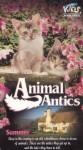 Animal Antics Summer