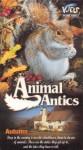 Animal Antics Autumn