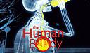 The Human Body (IMAX)