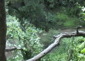 Scenic Videos Collection One: Wind, Water, and Rain
